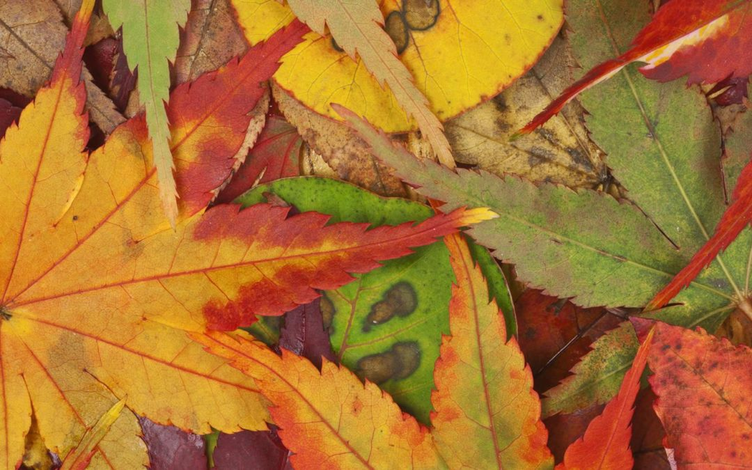 Nechte se oslnit zlatými tóny podzimu
